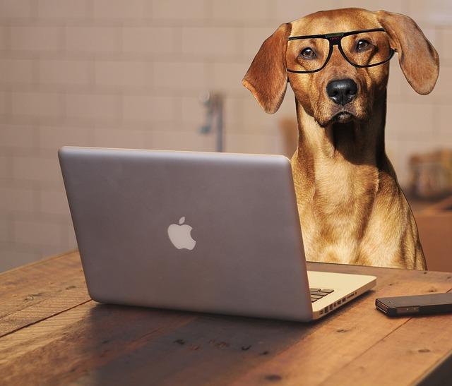 Tips på underhållning med hundtema