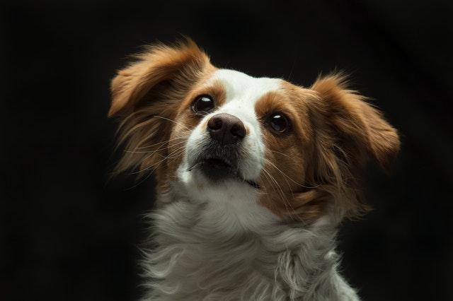 Vilken hund passar mig?
