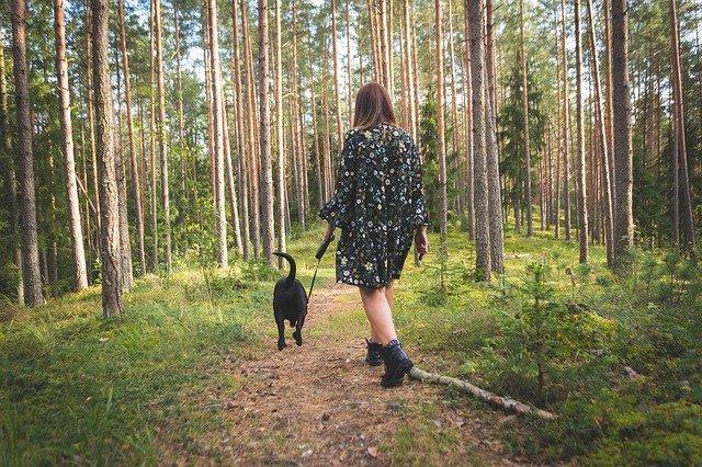 Lugna promenader i skogen