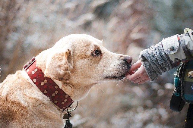 Tips på aktiviteter för både dig och din hund